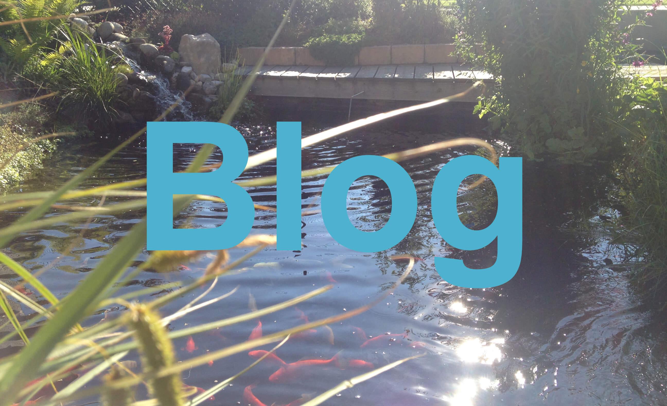 Gartenteich Blog