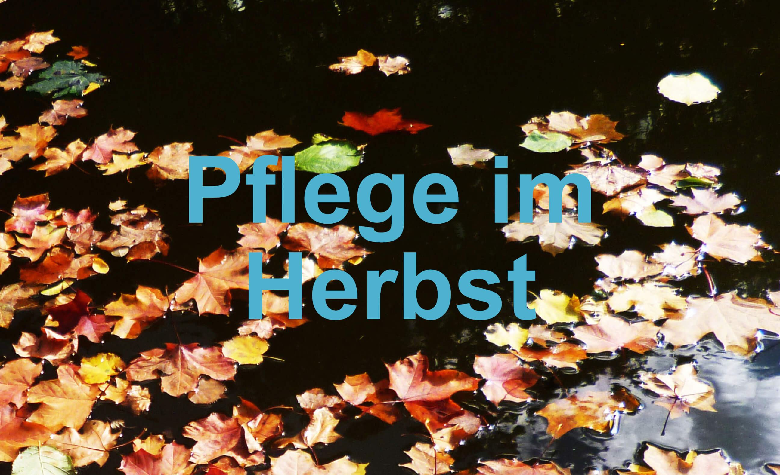 Gartenteich Ratgeber Herbst