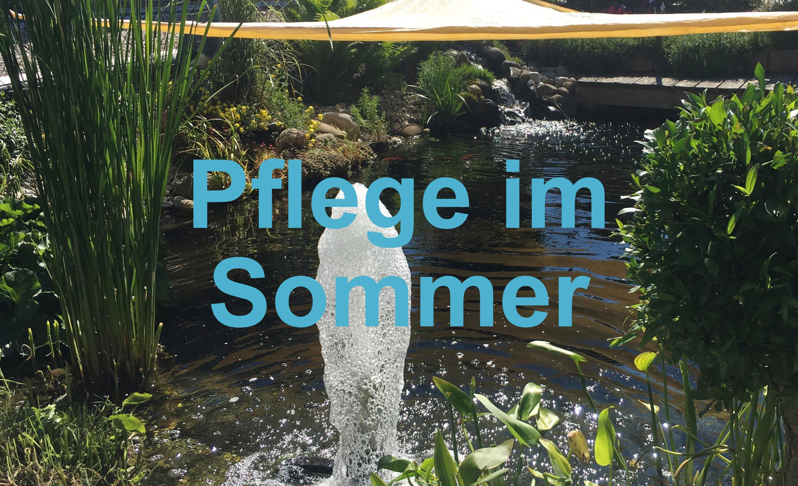 Ratgeber Sommer