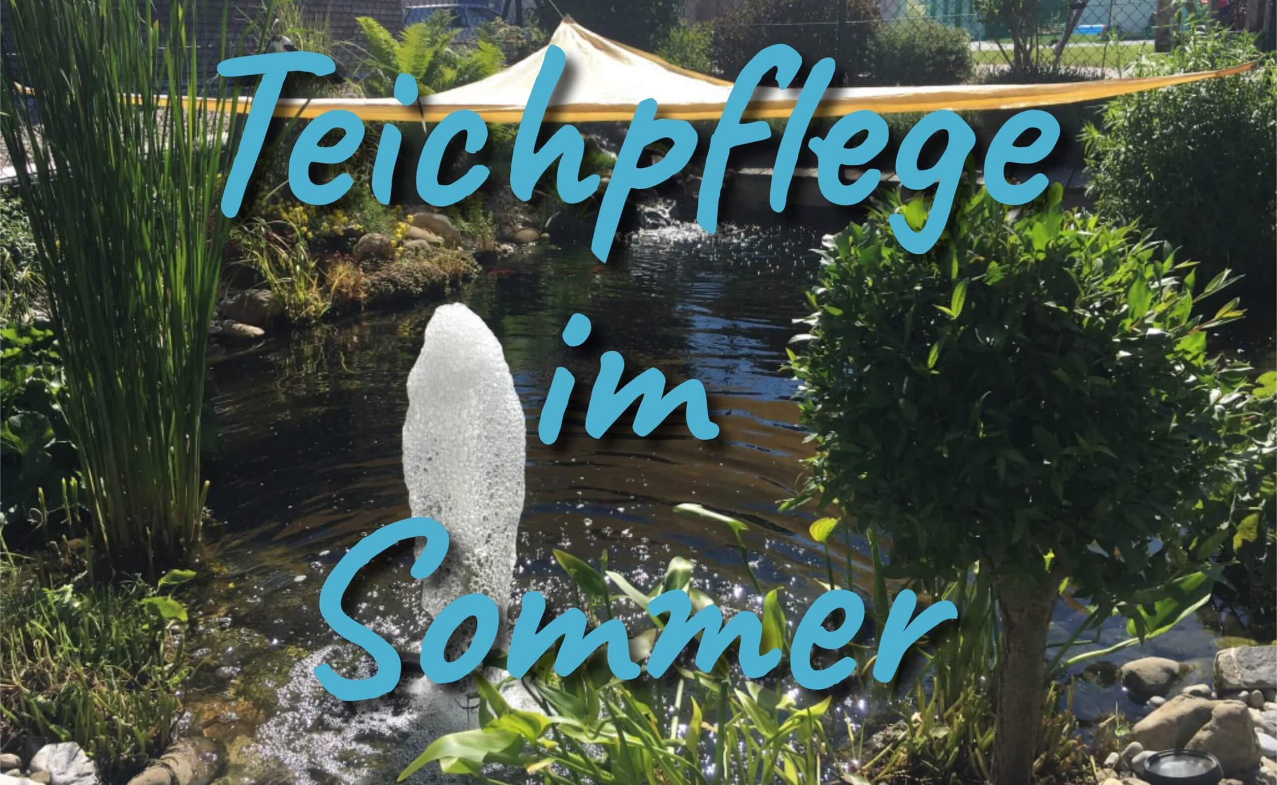 Sommer Teichpflege